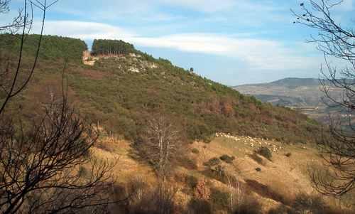 Convocada  subasta de madera del monte de Castrelo de Cima
