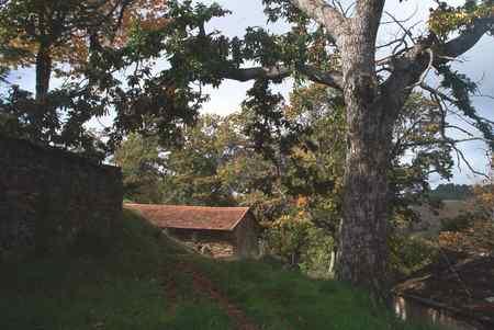 El Inorde intenta potenciar la castaña con plantaciones en la comarca de Conso-Frieiras y Vilardevós